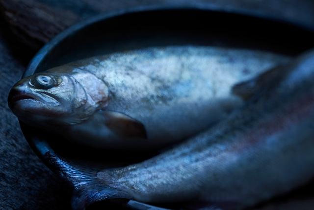 Cambo ACTUS FISH