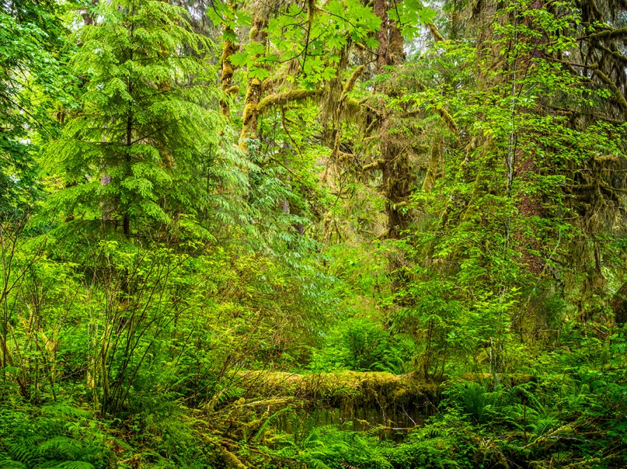 hoh-rainforest_2017