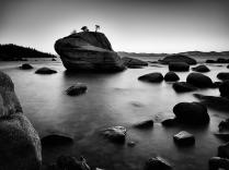 Bonzai Rock